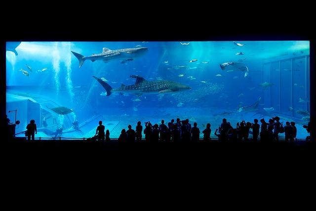 Trgovina za male živali nudi tudi opremo za akvarije