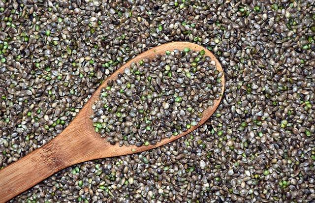 Konopljino olje pridobivamo iz semen industrijske konoplje